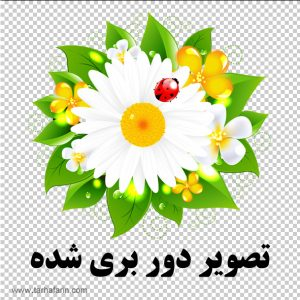 وکتور گل و بوته با کیفیت