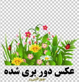 دانلود عکس با کیفیت گل و بوته