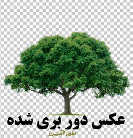 طرح تصویر با کیفیت درخت
