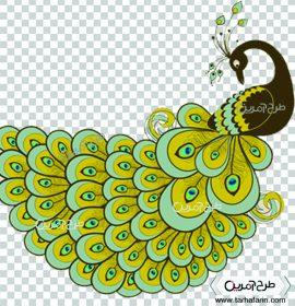 وکتور طاووس با کیفیت و png